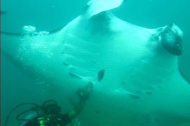 DM Melvin with the Manta ray